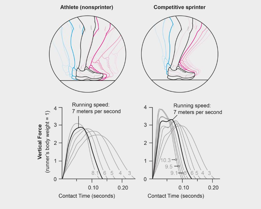 Sprint Faster - a-visual-guide-to-running-like-an-olympian-scientific-american-blog-network-sprint